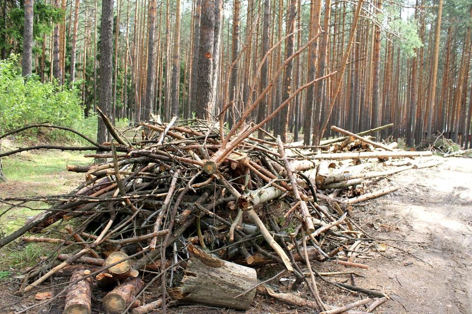 Есть ли штраф за сбор дров в лесу