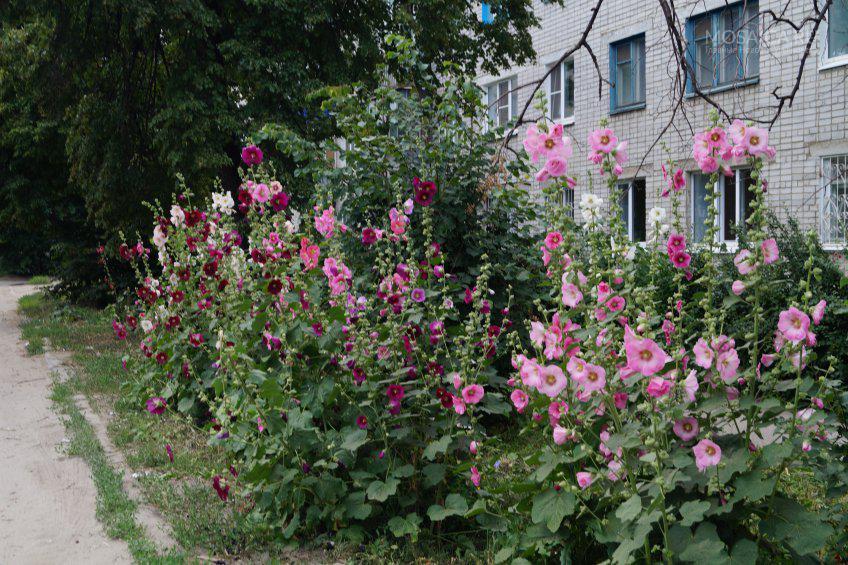 Огород под окнами многоэтажки: законно ли это